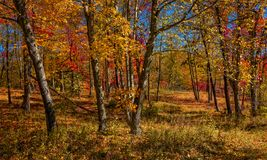 De herfstbos stock fotografie