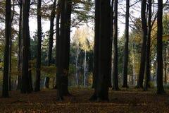 De herfstbos 01 royalty-vrije stock afbeelding