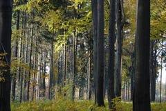 De herfstbos 02 stock afbeelding