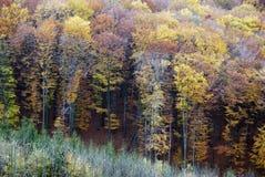 De herfstbos royalty-vrije stock fotografie