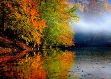 De herfstbos Stock Afbeeldingen