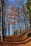 De herfstbos Stock Foto's