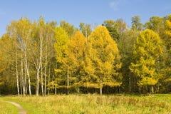 De herfstbos royalty-vrije stock afbeeldingen
