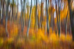 De herfstbos Stock Afbeelding