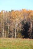 De herfstbos. royalty-vrije stock afbeeldingen