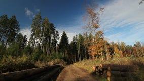 De herfstbos stock videobeelden