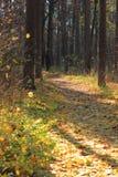 In de herfstbos Stock Foto's