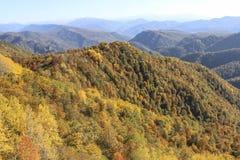 De herfstbos in de bergen van lago-Naki in November royalty-vrije stock fotografie