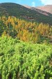 De herfstbos bij Ziarska-dolina - vallei in Hoge Tatras, Slovaki Stock Afbeelding