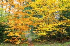 De herfstbos bij Ziarska-dolina - vallei in Hoge Tatras, Slovaki Stock Foto's