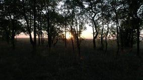 De herfstbos bij zonsondergang, langzame motie in de zon stock video