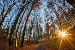 De herfstbos bij zonsondergang in Tsjechische Republiek stock foto