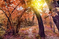 De herfstbos bij zonsopgang Royalty-vrije Stock Foto's