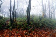 De herfstbos in China stock afbeeldingen