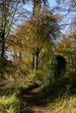 De herfstbos in Cotswolds het UK royalty-vrije stock fotografie