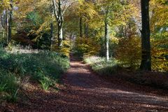 De herfstbos in Cotswolds het UK stock fotografie