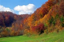 De herfstbos in de Karpatische Bergen, Roemenië Stock Foto's