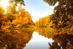 De herfstbos door de rivier Stock Afbeeldingen