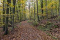 De herfstbos in Duitsland Stock Fotografie