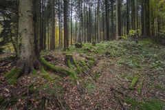 De herfstbos in Duitsland Royalty-vrije Stock Afbeelding