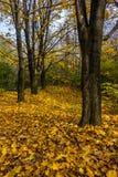 De herfstbos in gebladerte Royalty-vrije Stock Foto's