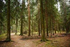 De herfstbos, het gebied van Moskou Stock Foto