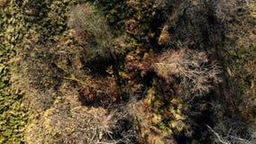 De herfstbos hierboven wordt gezien die van stock footage