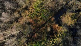 De herfstbos hierboven wordt gezien die van stock videobeelden