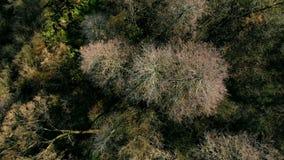 De herfstbos hierboven wordt gezien die van stock video
