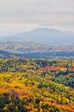 De herfstbos met berg stock fotografie