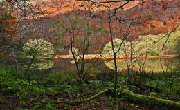 De herfstbos met bezinning over meer Stock Foto