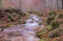 De herfstbos met een bergrivier met watervallen Stock Fotografie