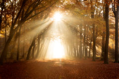 De herfstbos met gevallen bladeren en zonlicht stock fotografie