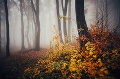 De herfstbos met kleurrijke bladeren en mist royalty-vrije stock foto