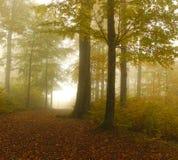 De herfstbos met mist Stock Foto