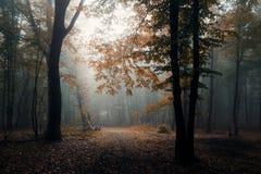 De herfstbos met mist en oranje bladeren stock afbeeldingen