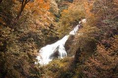 De herfstbos met rivier Royalty-vrije Stock Afbeelding