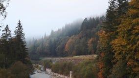 De herfstbos in de mist waardoor de rivier vloeit stock footage
