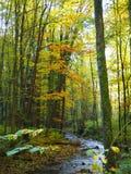 De herfstbos in Moravië, het oosten van Tsjechische Republiek stock foto's