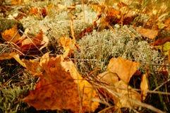 De herfstbos, Noorwegen Stock Afbeelding