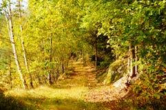 De herfstbos, Noorwegen Stock Fotografie