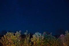 De herfstbos onder blauwe donkere nachthemel Royalty-vrije Stock Afbeeldingen