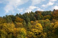 De herfstbos op de hemelachtergrond stock afbeelding