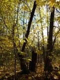 De herfstbos op een duidelijke dag royalty-vrije stock afbeeldingen