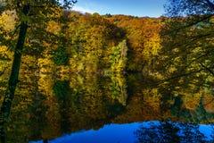 De herfstbos op de rand van een meer stock foto's