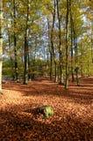 De herfstbos in Polen Royalty-vrije Stock Foto's