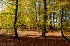 De herfstbos in Polen Royalty-vrije Stock Foto