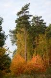 De herfstbos in Polen Royalty-vrije Stock Fotografie