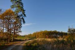 De herfstbos in Polen Stock Fotografie