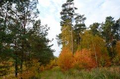 De herfstbos in Polen Stock Afbeeldingen
